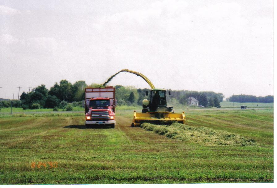 Chopping Alfalfa at Soaring Eagle Dairy